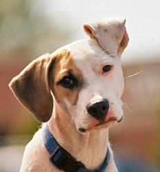 Reiki für Hunde