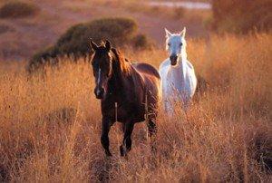 Reiki für Pferde